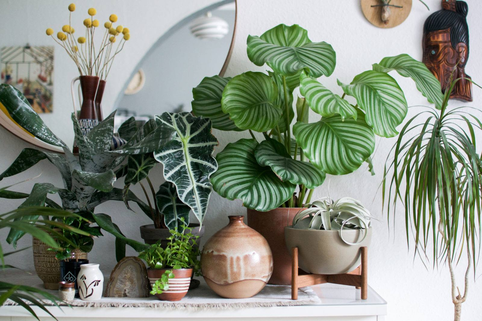 Live plant decor for fresh style and air