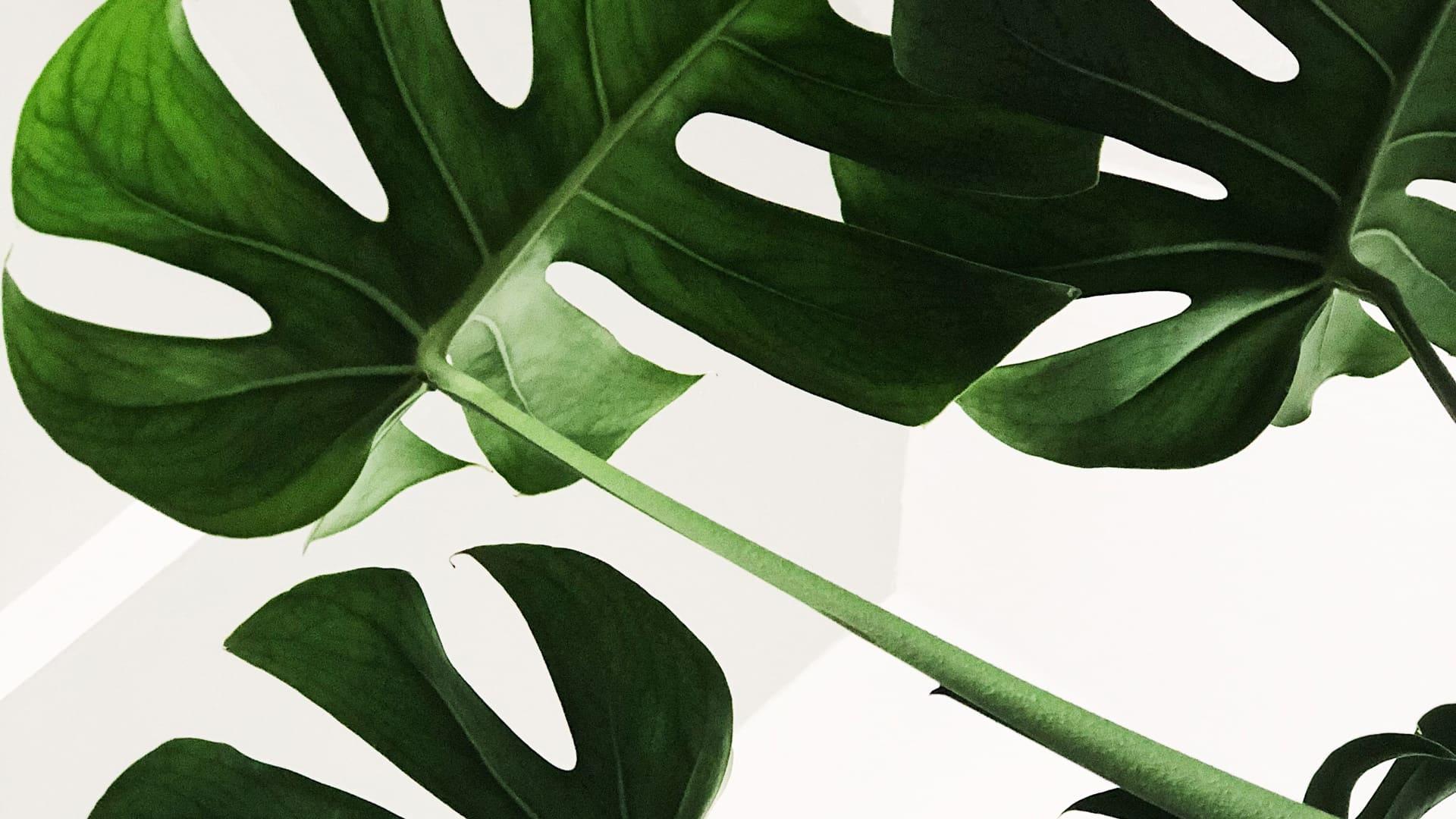 web_plants_1